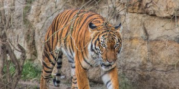 Birmiingham Zoo | Birmingham AL | Jefferson County Alabama