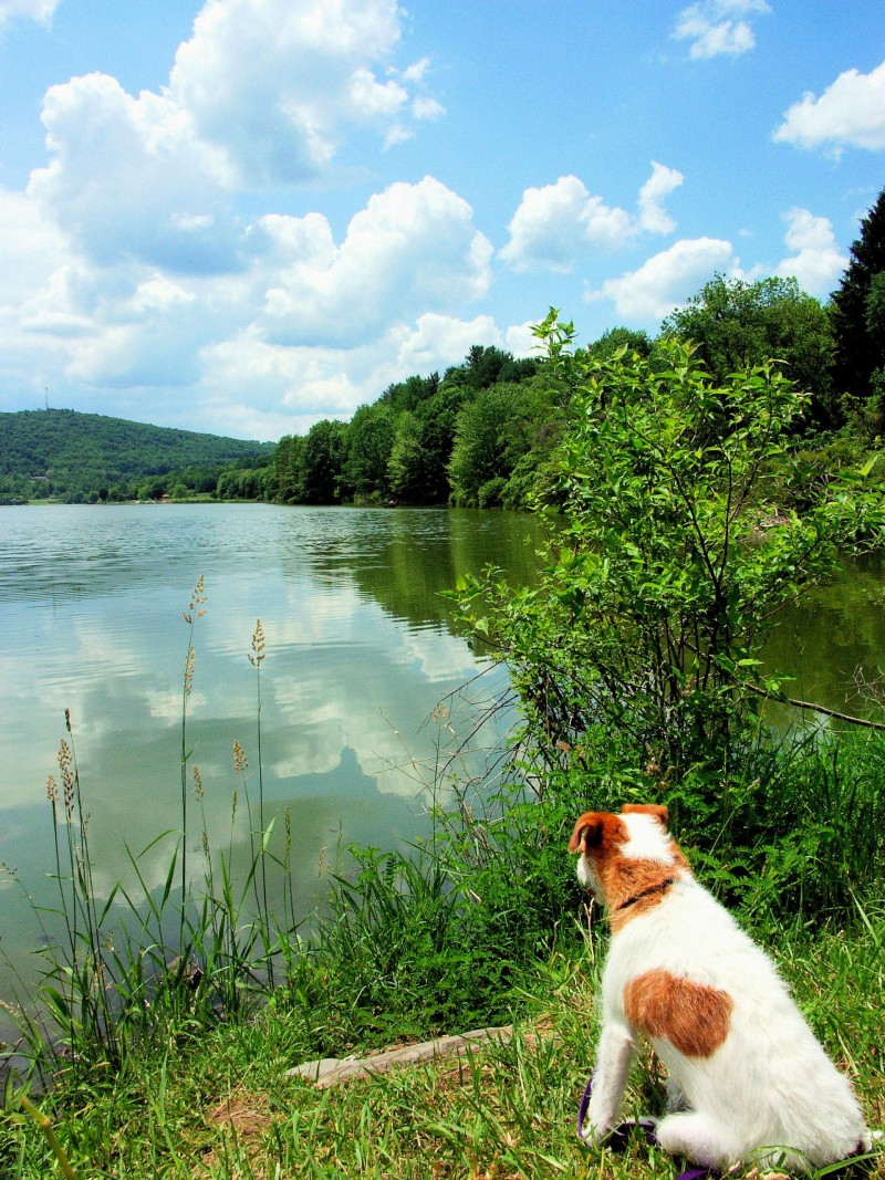 Lake Guntersville State Park Dog-Friendly Accommodations