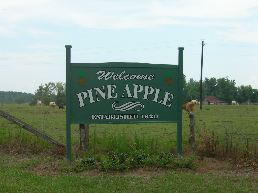 Digital Alabama Guide to Pine Apple Alabama