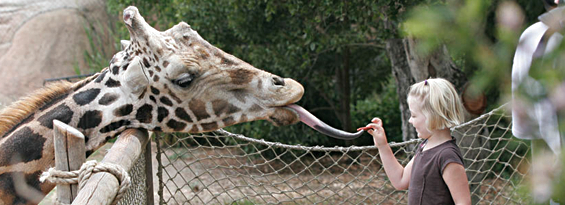 Kid-Friendly-Alabama-Zoos
